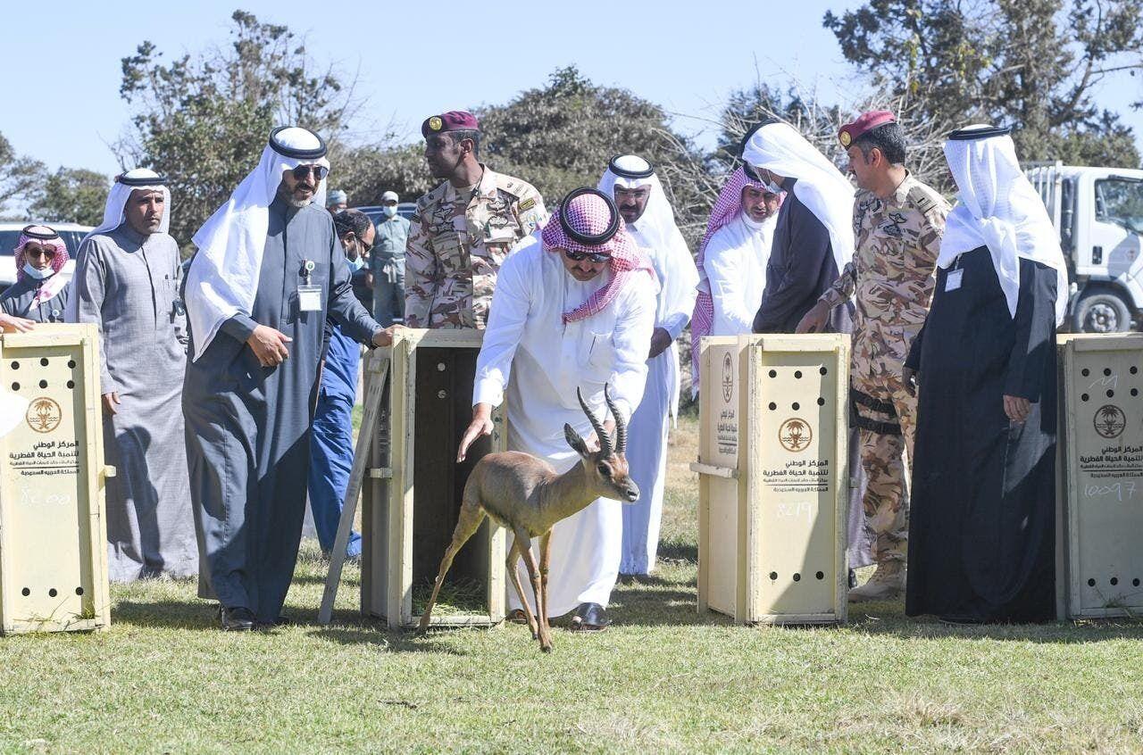 animals in saudi