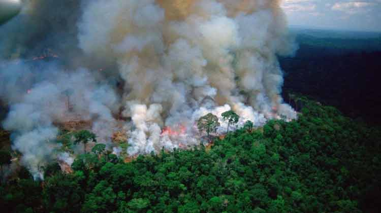 Amazone-forest-fire-1230819.jpg