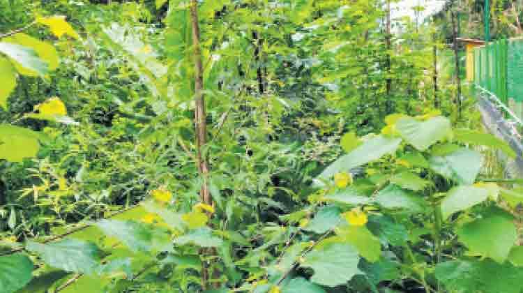 Miyawaki-Forest-in-Trivandrum