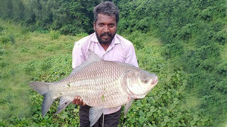 chalakudy-fish-new-1.jpg