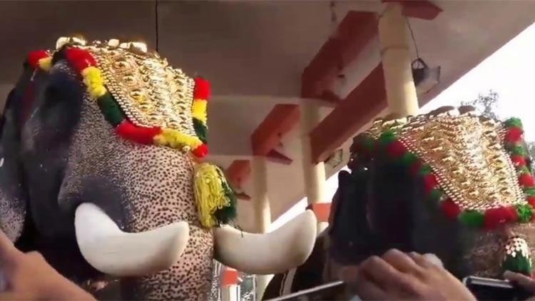 മദപ്പാട് കാലത്തും ആനകളെ എഴുന്നള്ളിക്കാൻ നിർബന്ധിതരാകുന്നു –പാപ്പാന്മാർ