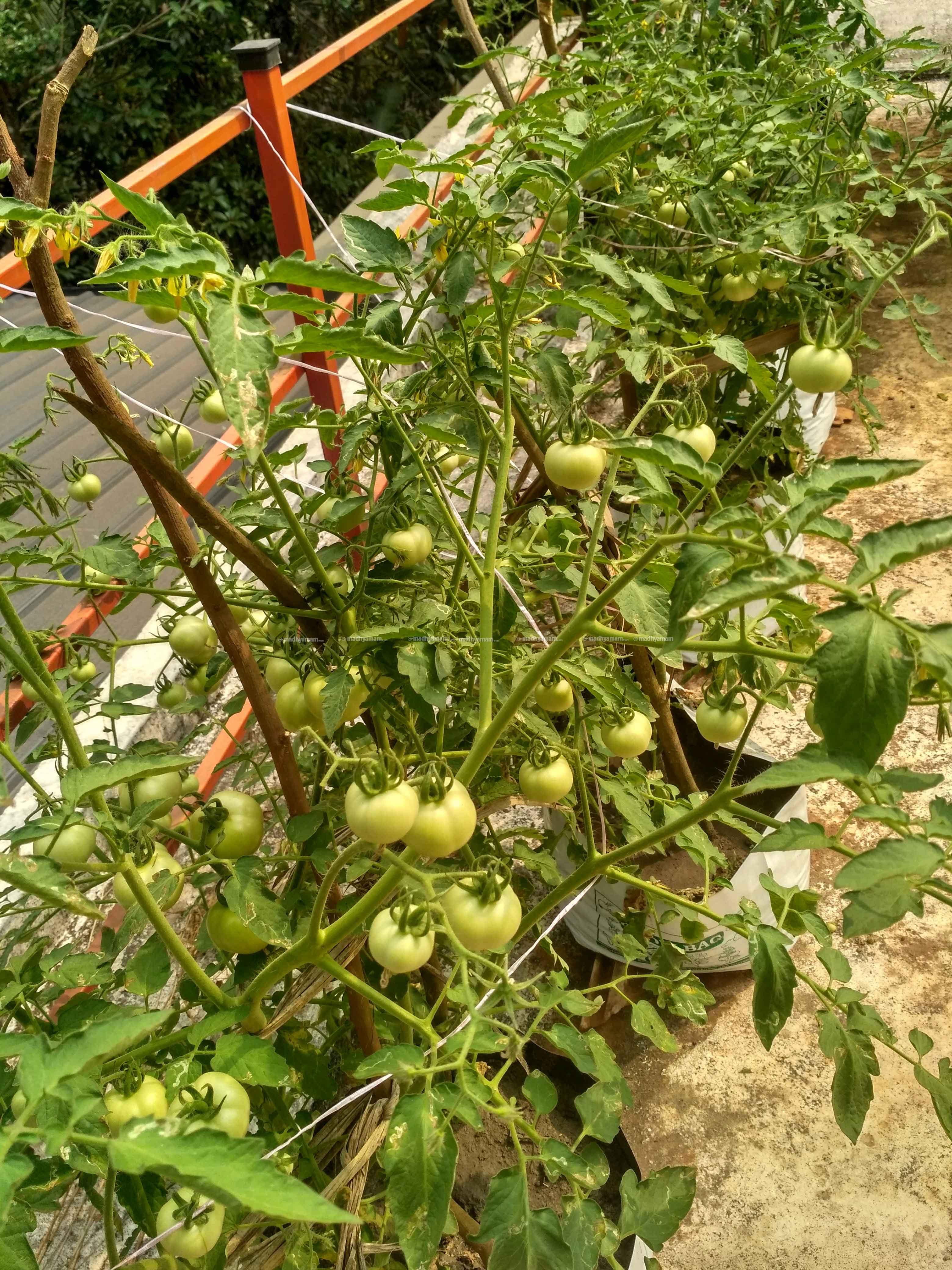 kitchen-farm-4