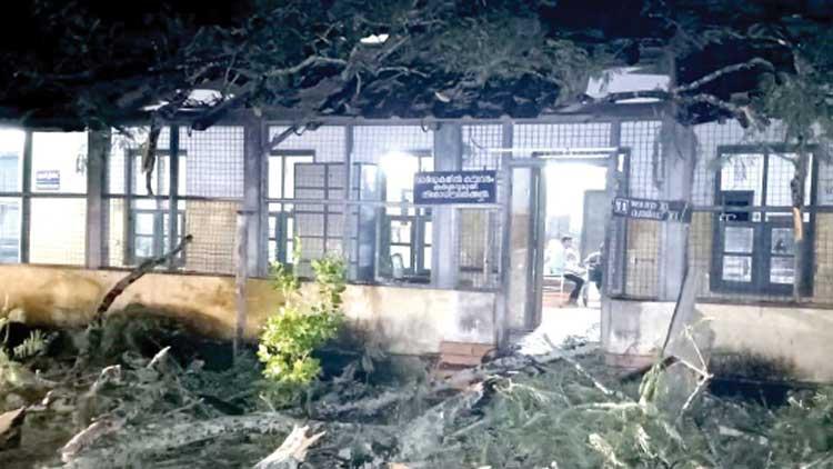 ജില്ല ആശുപത്രിക്ക് മുകളിൽ മരംവീണു; നാലുപേർക്ക് പരിക്ക്
