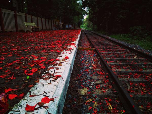 nilmbur-train-10