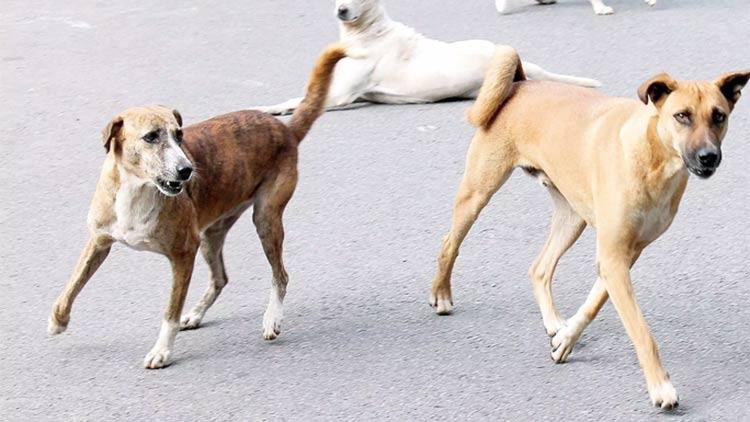 street-dog.jpg