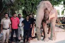 elephant-laxmi-jumbo