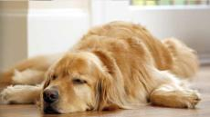 dog-150919.jpg