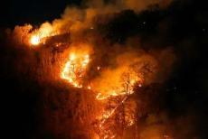 Amazone-forest-fire-4230819.jpg