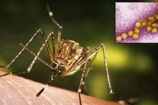 WEST-nile-fever-23