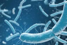 bacteria-281119.jpg