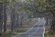 bandipur-road