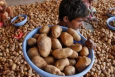 india-potatoes