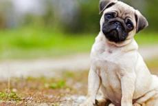 pet-dog-11119.jpg