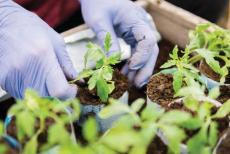 plants-greenhouse-crops