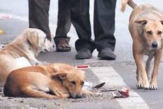 stray-dogs.jpg