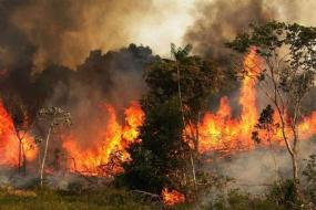 fire-at-amazone-rainforest.