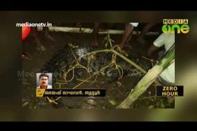 ചാലക്കുടി പുഴയില് എത്തിയ മുതലയെ നാട്ടുകാര് പിടികൂടി | Crocodile | kerala floods